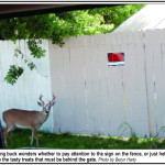 Key Deer contemplates a sign